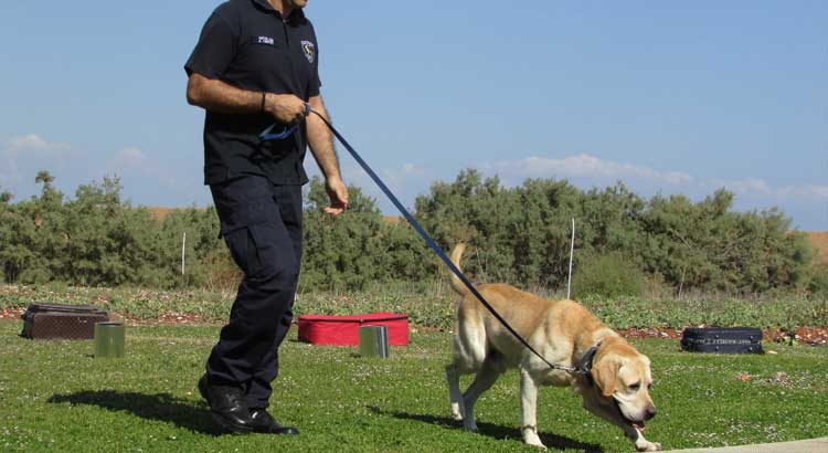 Police-Labrador leading policeman by leash