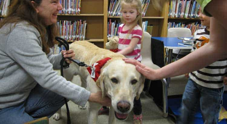 Therapy Labrador being pet by women and children