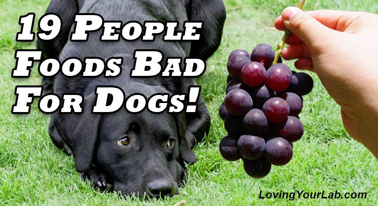 Labrador laying in the grass looking at grapes with the title, 19 People Foods Bad for Dogs